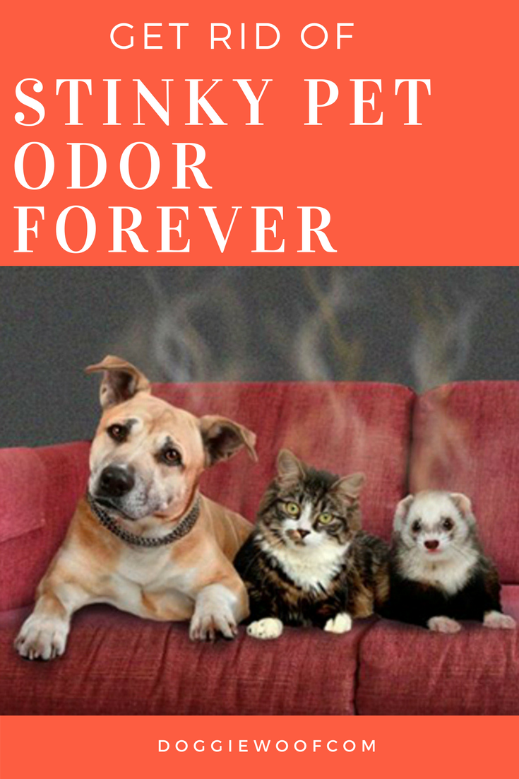 Best Air Purifier For Pets Get Rid Of Awful Pet Odors With