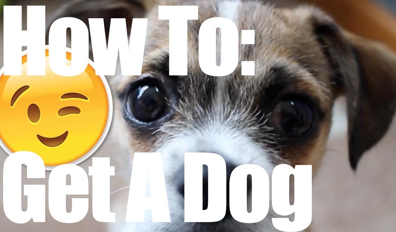 How to convince your parents to get a dog socializing