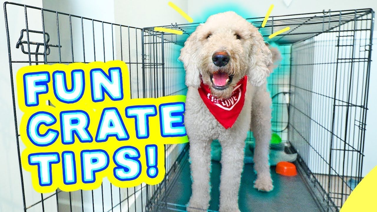 BEST Crate Training Games for PUPPIES! 🐶 Dog Scared of