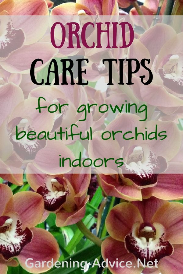 Growing Orchids Indoors - Orchid Care Instructions And Tips #growingorchids