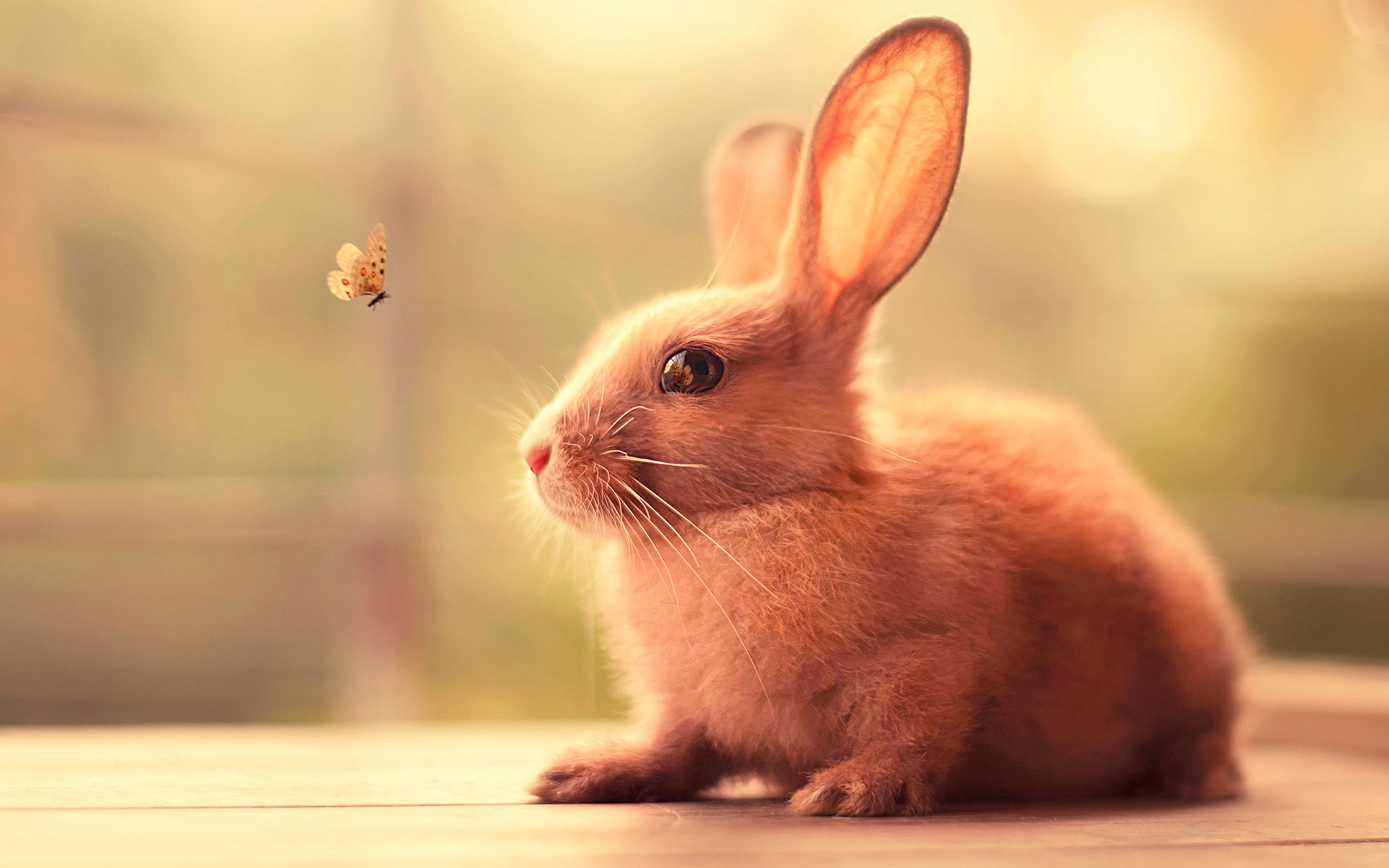 Cute Bunny Wallpapers Wallpaper