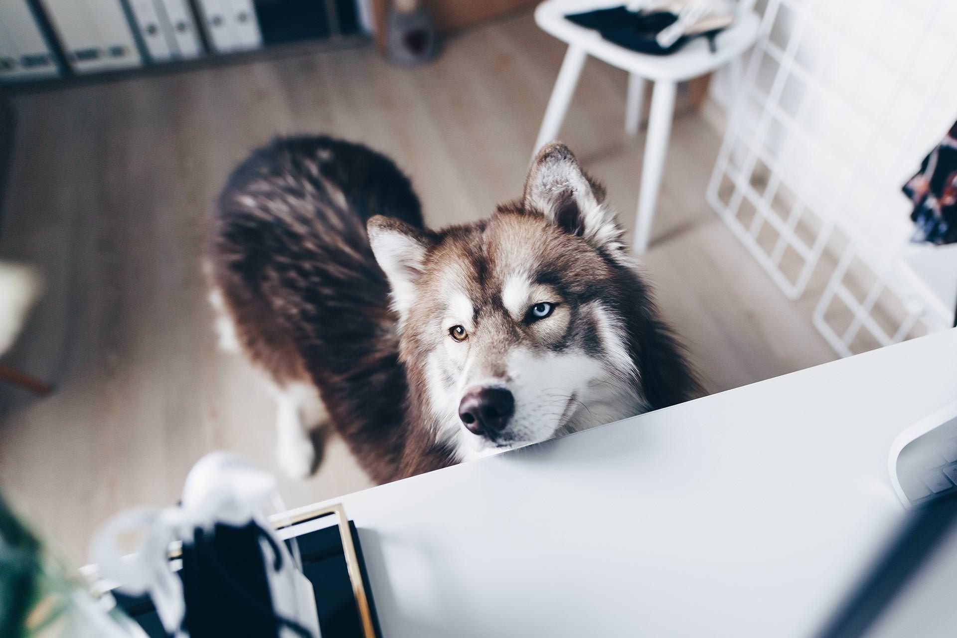 Arbeitsplatz Zuhause Einrichten 5 Ideen Fur Mehr Stil Im Blogger Home Office Cute Funny Dogs Dogs Puppies