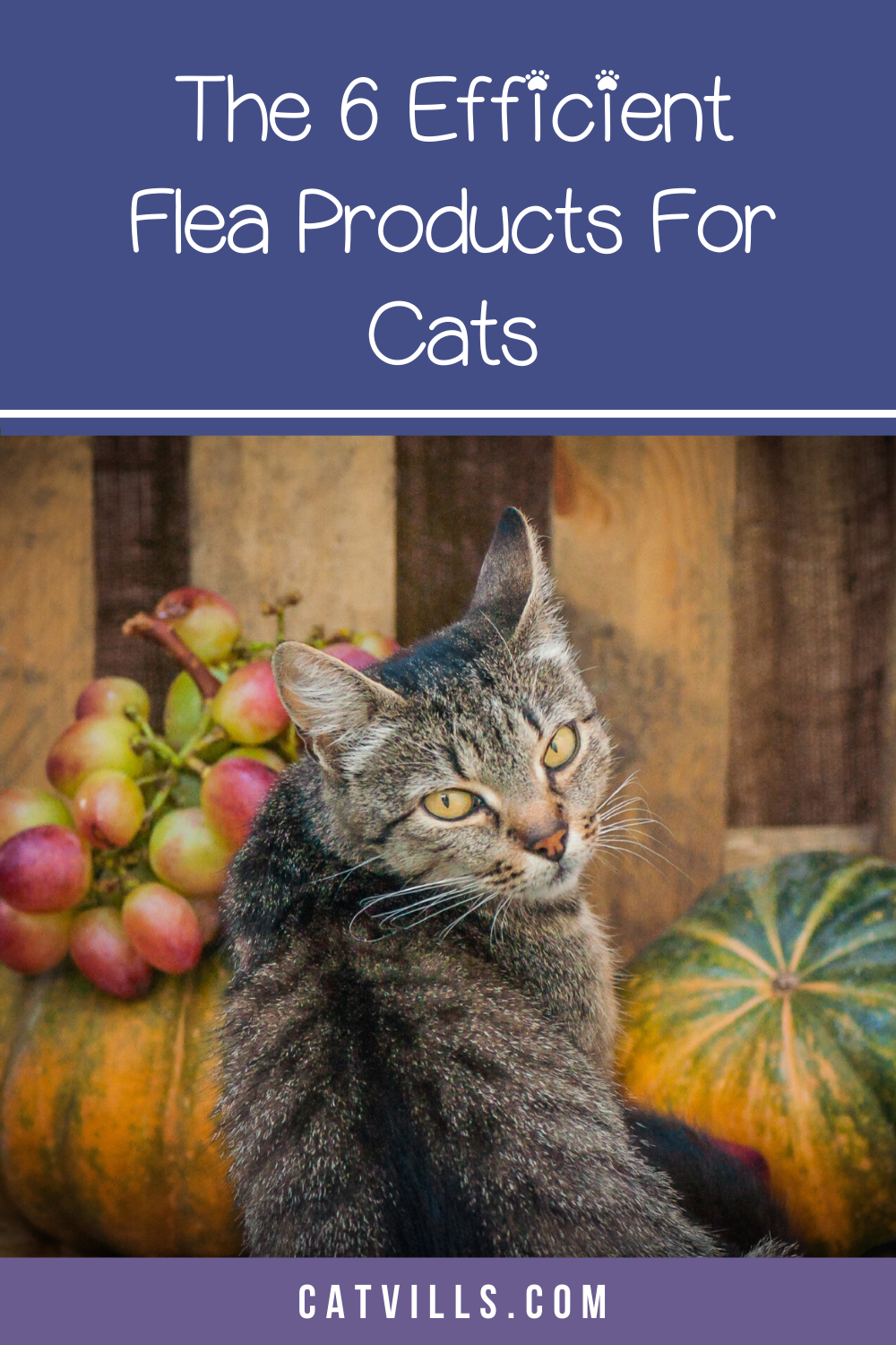 The Best Flea Tick And Heartworm Prevention Products Aren T Just Something You Need To Cons In 2020 Heartworm Prevention Cat Fleas Treatment Heartworm Prevention Cats