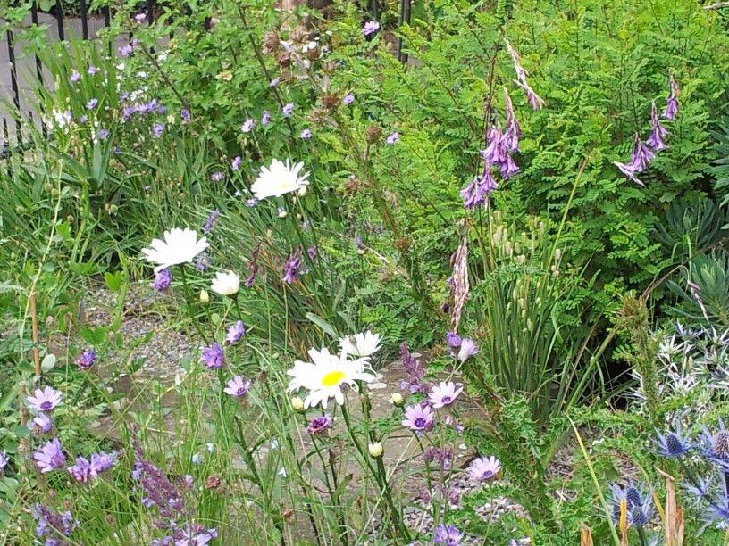 Wild flower garden in Dublin