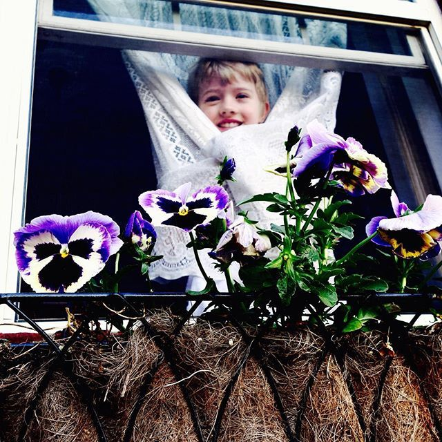 #simple A few of my favorite things: lace curtains + little people, window boxes + pansies