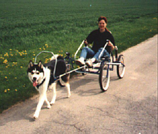How To Have Fun Carting With A Dog Dog Harness Dog Training