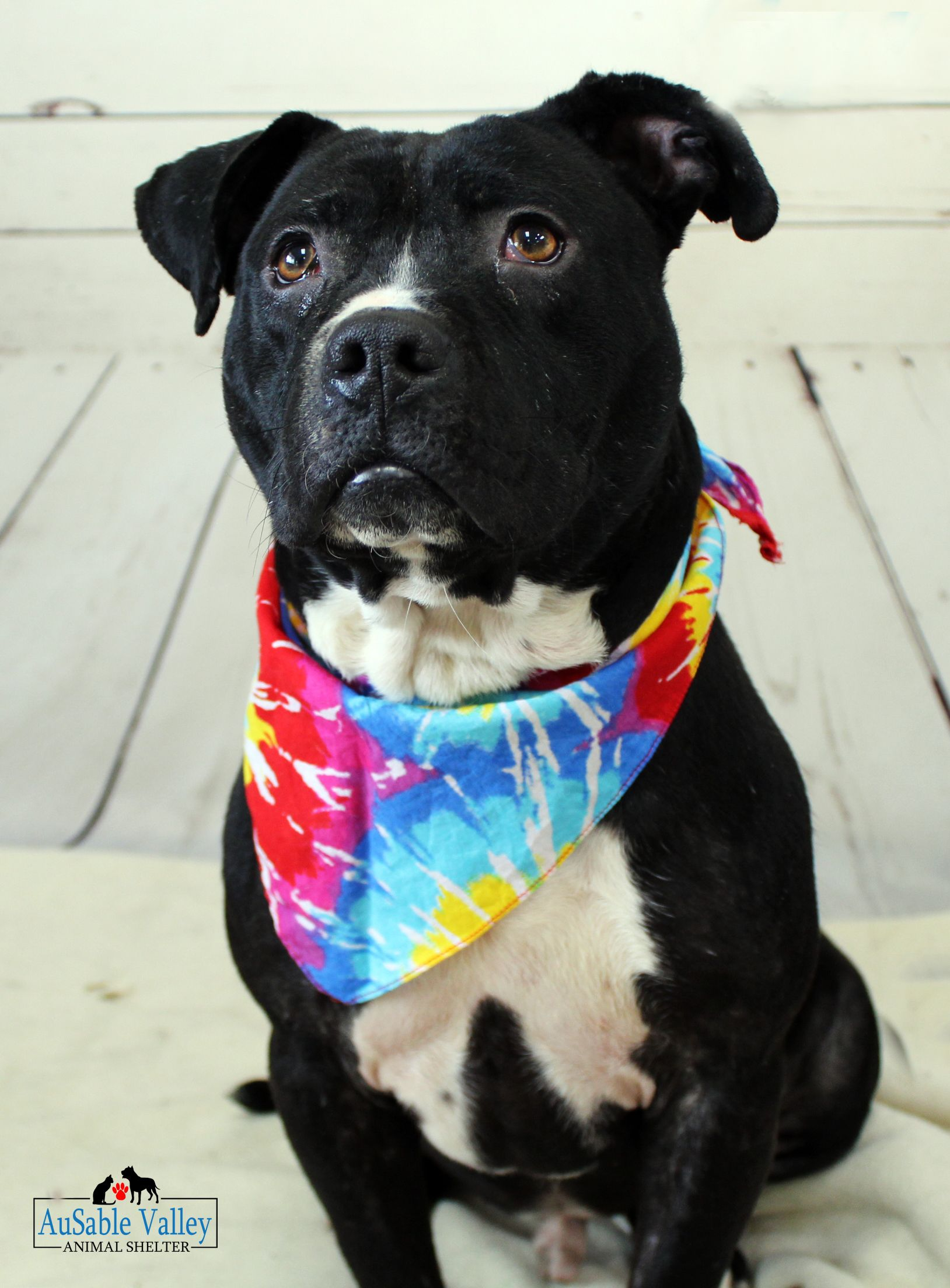 Adopt Griz on Terrier mix dogs, Animal shelter, Dogs