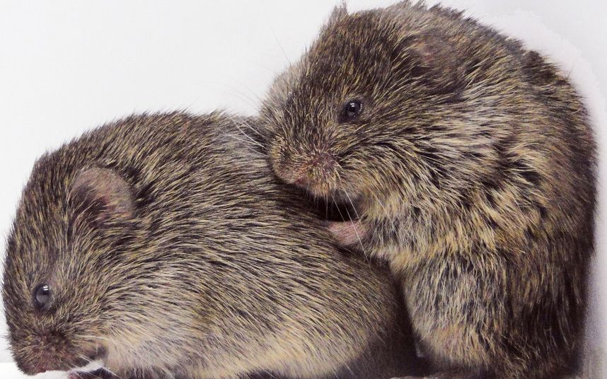 Study Shows Animals are More Capable of Empathy Than Previously Thought - Prairie voles who were familiar with each other and not strangers were found to console one another after experiencing stress. http://www.telegraph.co.uk/news/science/science-news/12117501/Animals-more-capable-of-empathy-than-previously-thought-study-finds.html