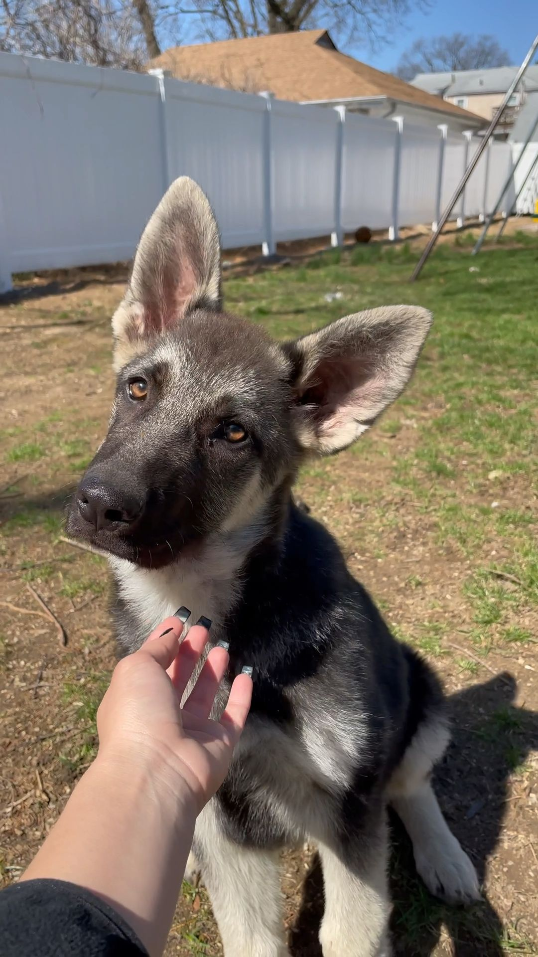 Looking for a furever home 🏡