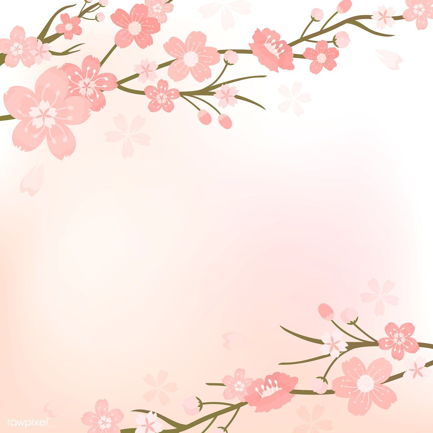 Pink Cherry Blossom Blank Background Vectot Free Image By Rawpixel Com Manotang Cherry Blossom Background Cherry Blossom Art Vector Free