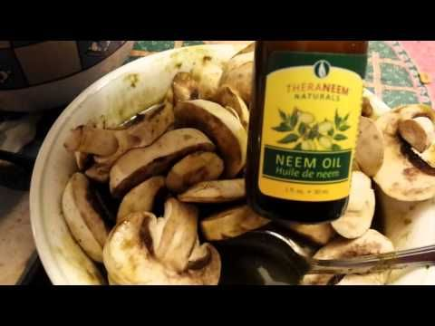 Foods for super healing ginger turmeric , dandelion , garlic , cayenne , neem oil , mushrooms  YouTube
