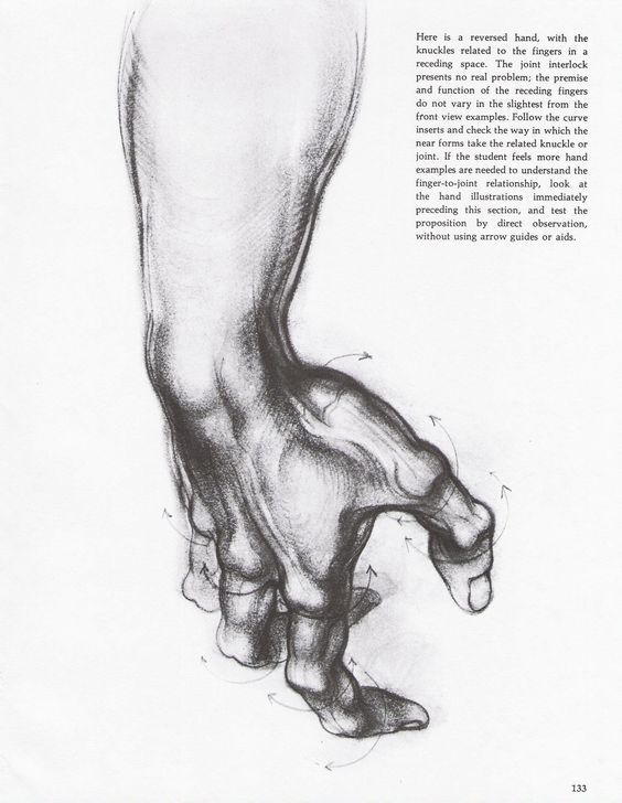 Character Design Collection: Hands Anatomy - Daily Art, references ...