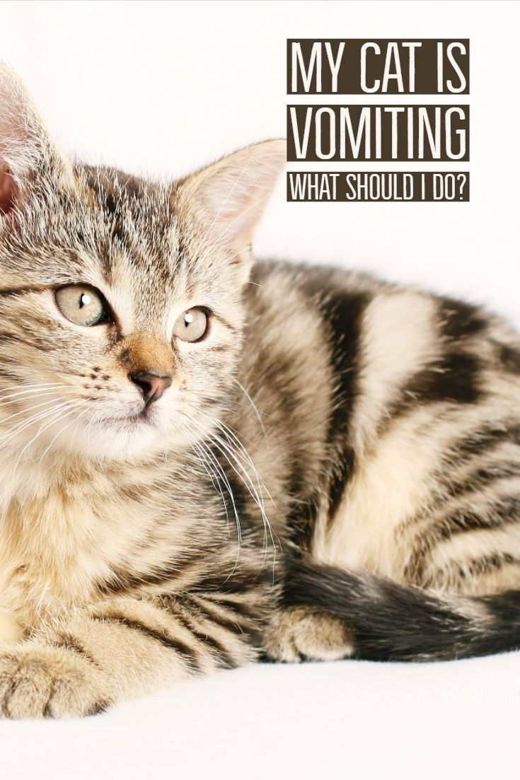 Vomiting in Cats When to Worry Cat Mama talks Cat