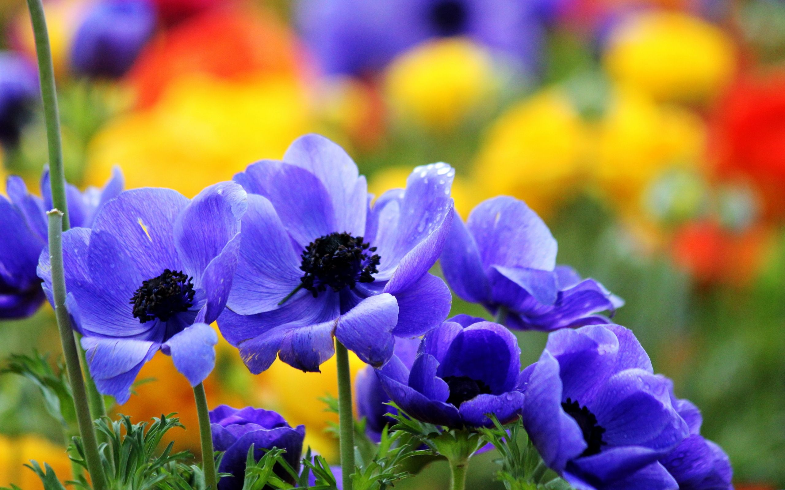 Pretty flowers background 594089 flowers photography wallpapers pretty flowers background 594089 flowers photography wallpapers voltagebd Gallery
