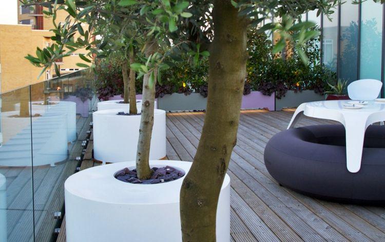 Terrasse Gestalten Leicht Gemacht Mit Einem Schönen Olivenbaum ... Terrasse Gestalten Olivenbaum