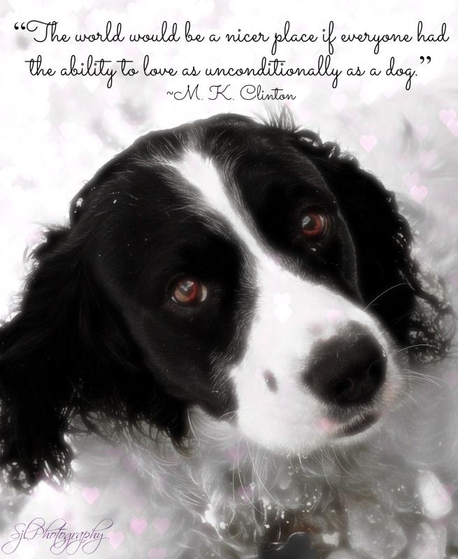 """""""The world would be a nicer place if everyone had the ability to love as unconditionally as a dog.""""  ~M.K. Clinton, Author"""