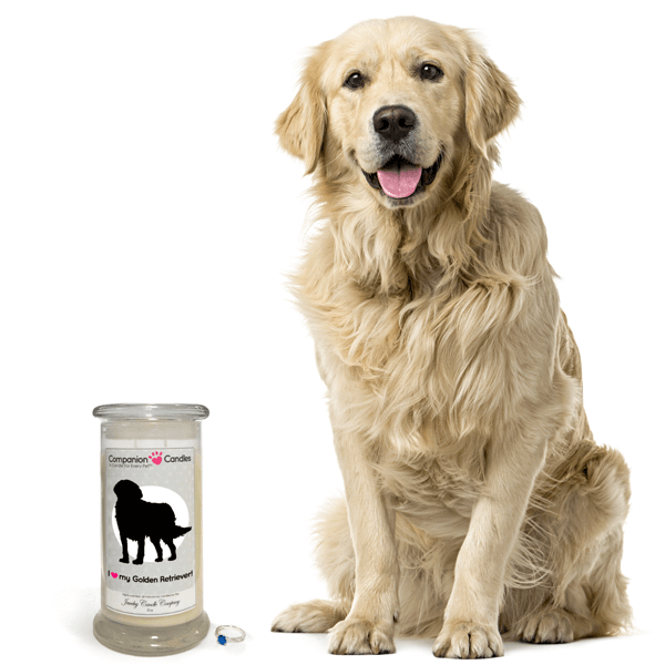 Win A Jewelry Companion Candle Of Your Choice Us 8 20 Golden Retriever Dog Stock Photo Dogs
