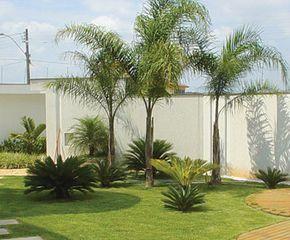 Jardin con palmera pindo buscar con google nancy for Jardines con palmeras
