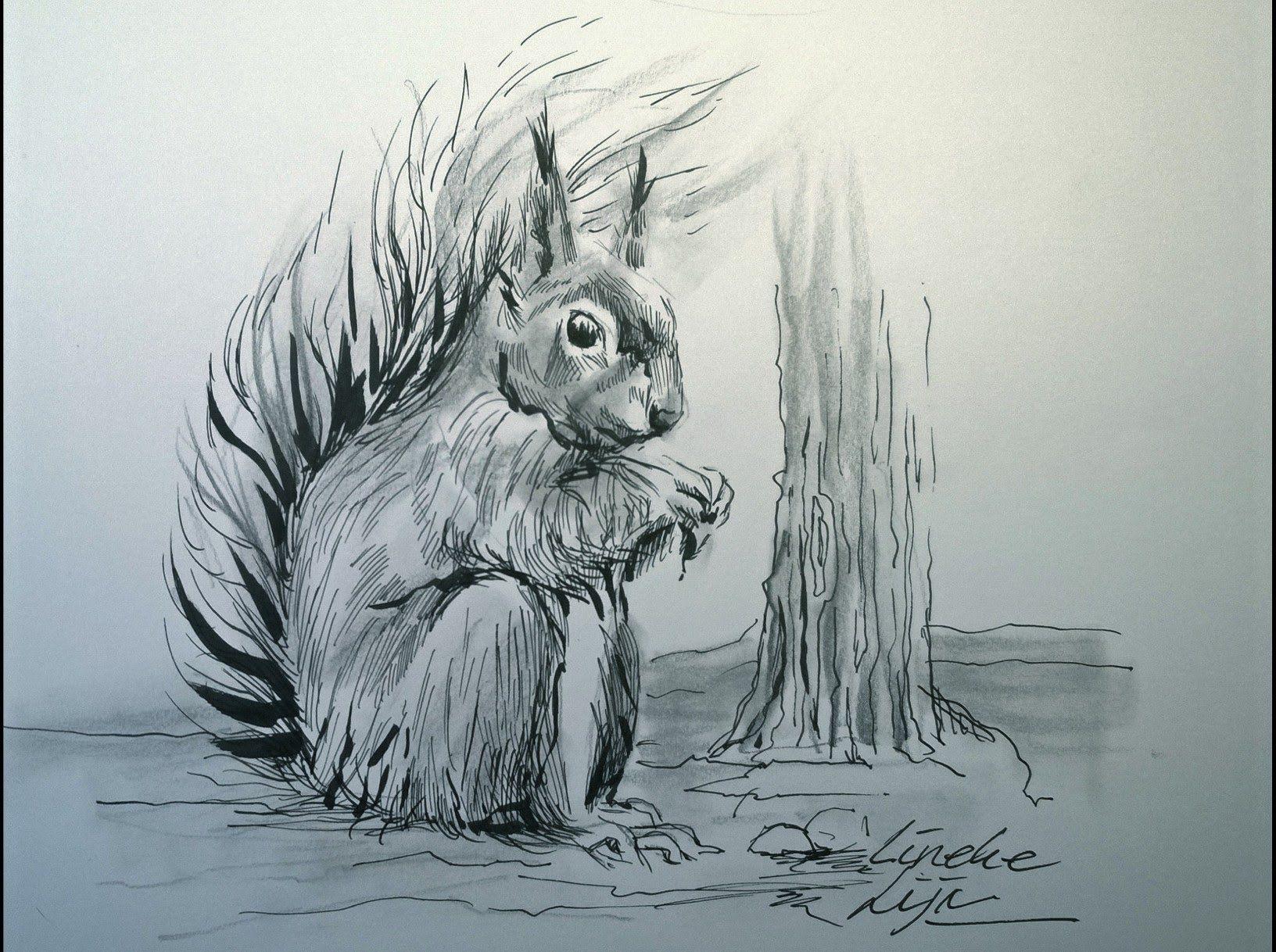 Hoe Teken Je Een Eekhoorn Dieren Tekenen Coole Tekeningen Easy Pencil Drawings