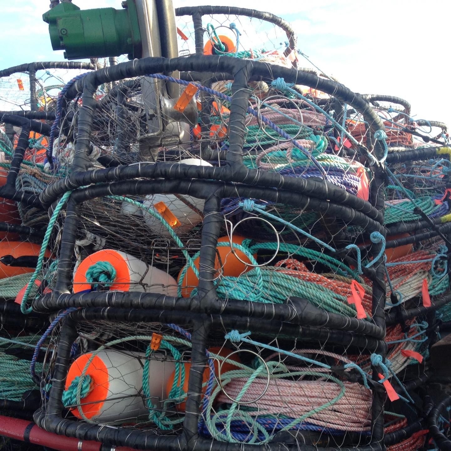 Commercial Dungeness Crab Fishing On The West Coast Is One Of The Highest Risk Occupations In The United States Based On Fata Dungeness Crab Crab Fishing Crab