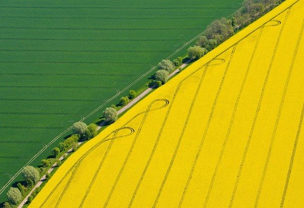 #Fields #Way