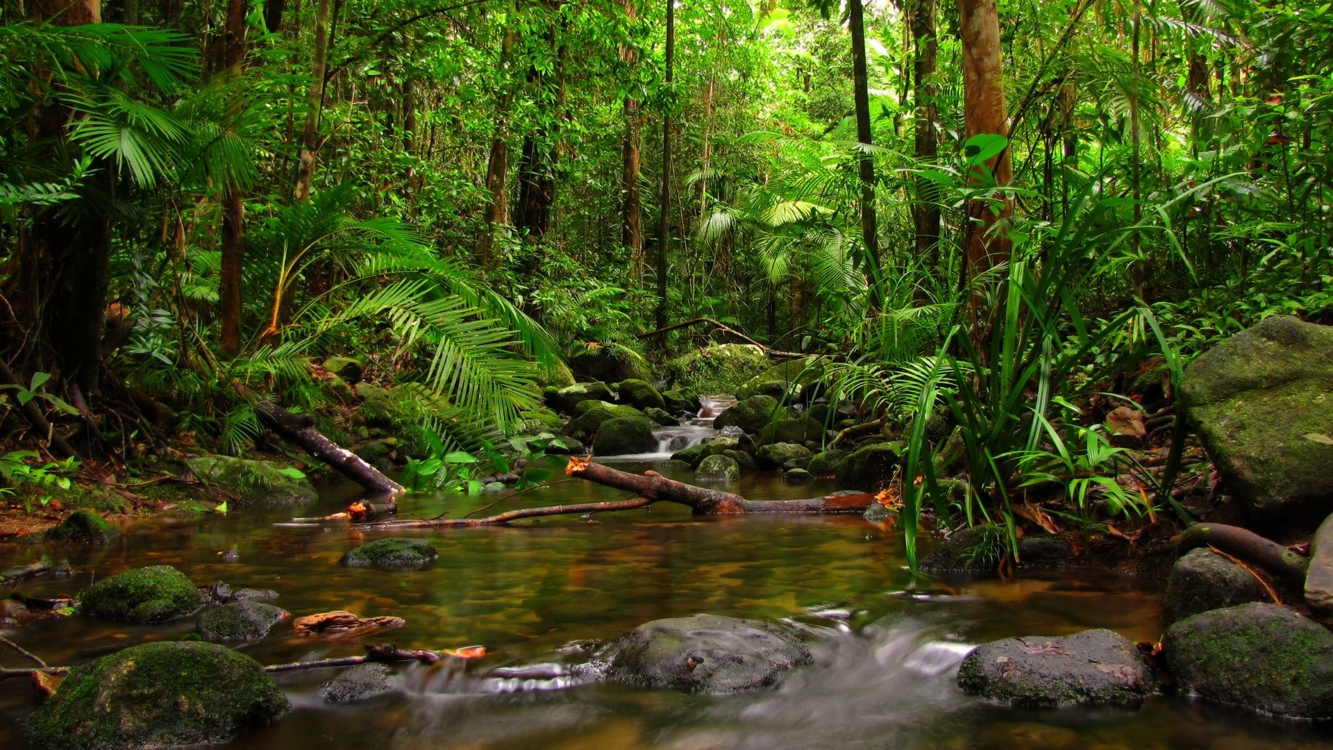 River Jungle Forest Nature HD 1920x1080 | Desktop Wallpaper in 2019 | Rainforest pictures ...