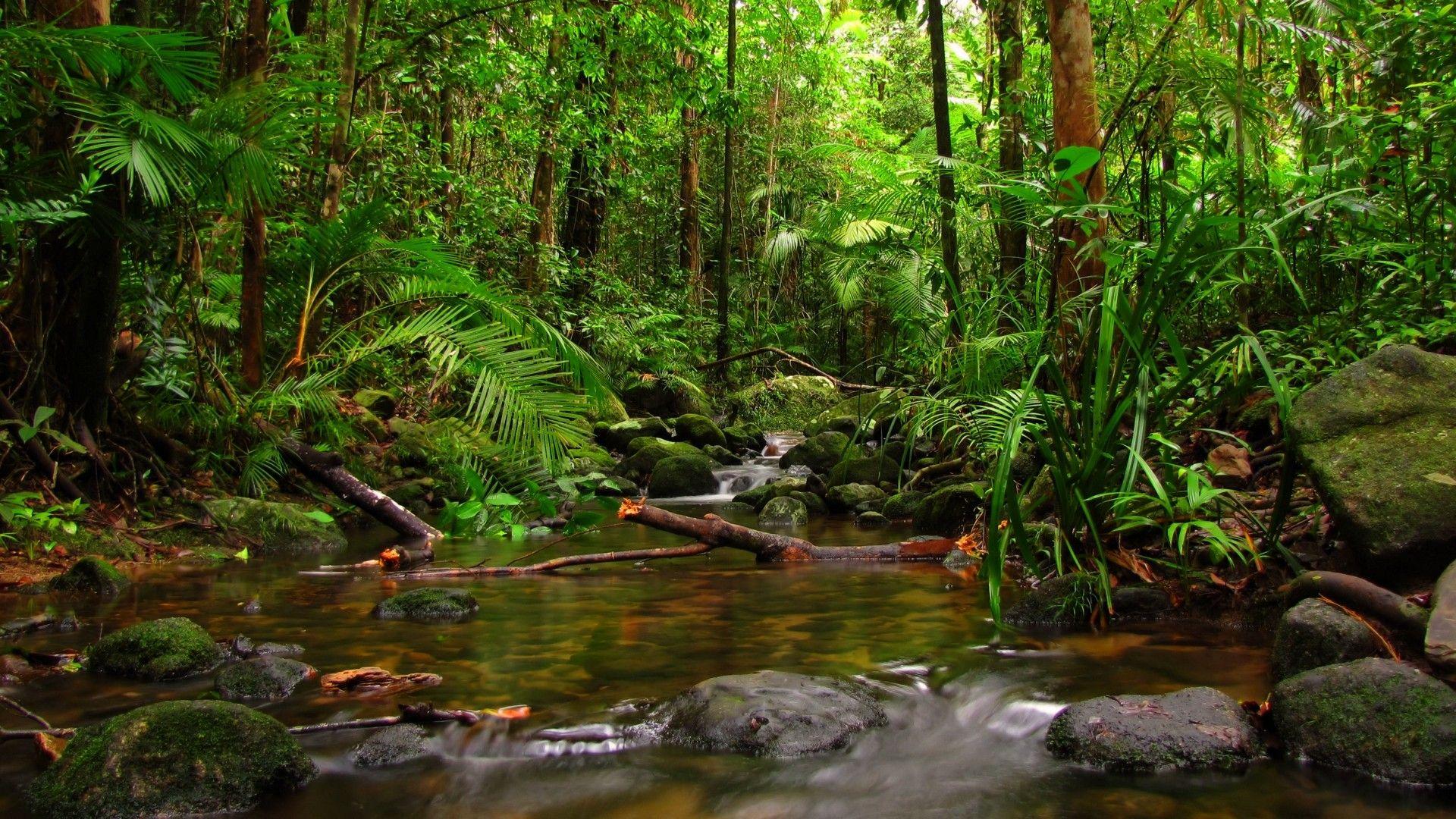 River Jungle Forest Nature HD 1920x1080 | Desktop Wallpaper in 2019 | Rainforest pictures ...