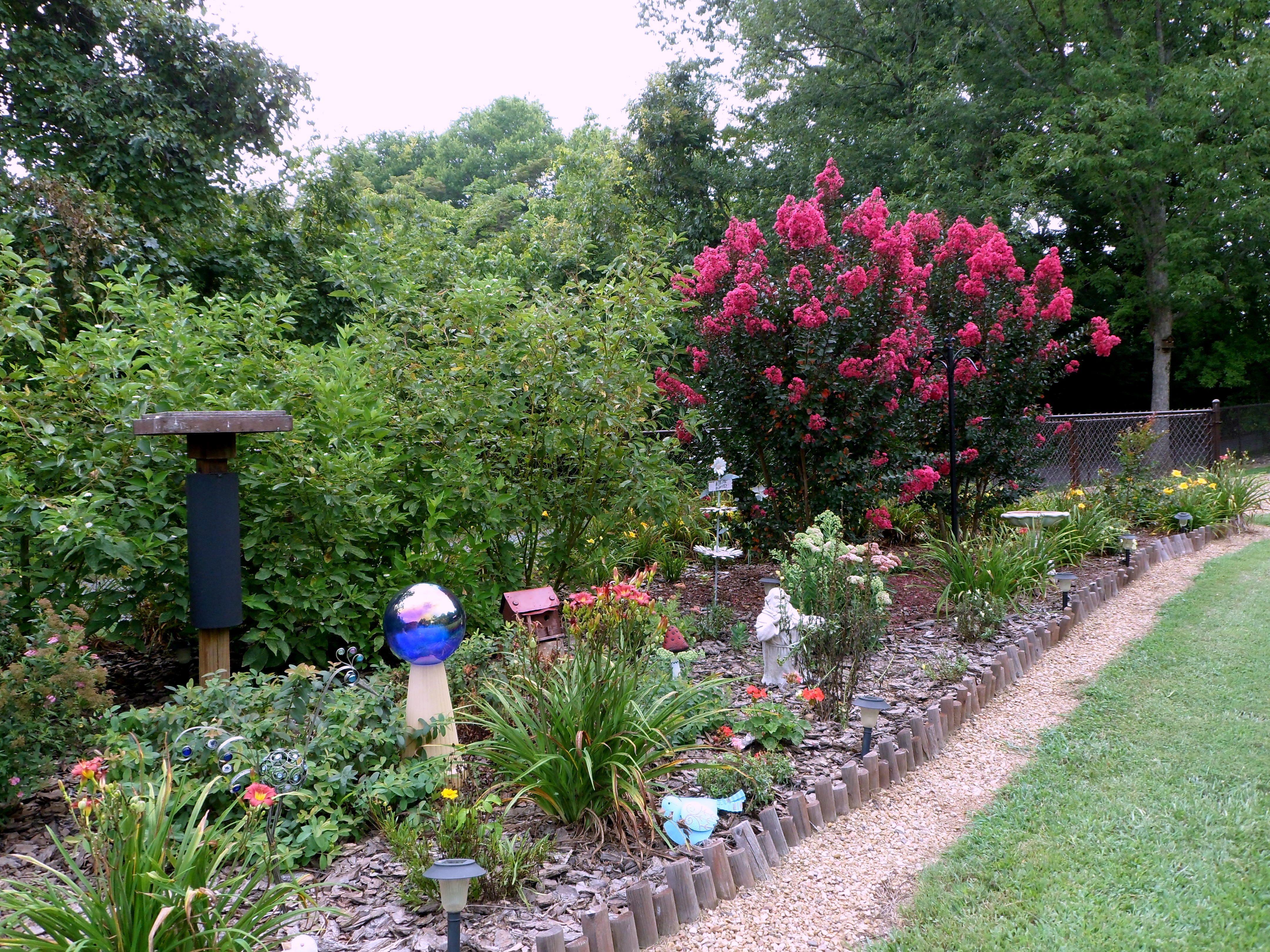 My Crepe Myrtles! Front garden, Garden, Plants