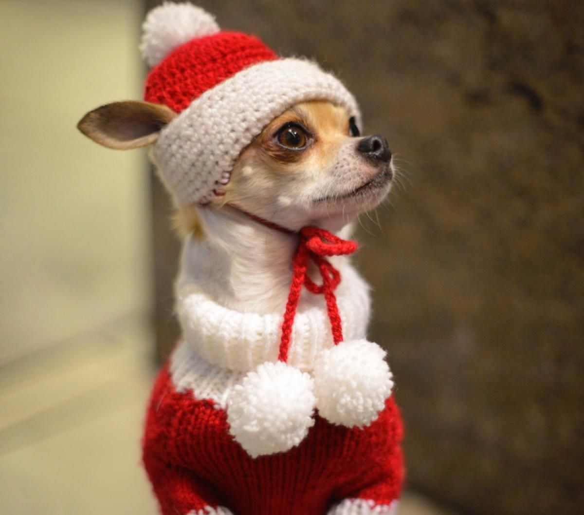christmas bat animal - Yahoo Image Search Results