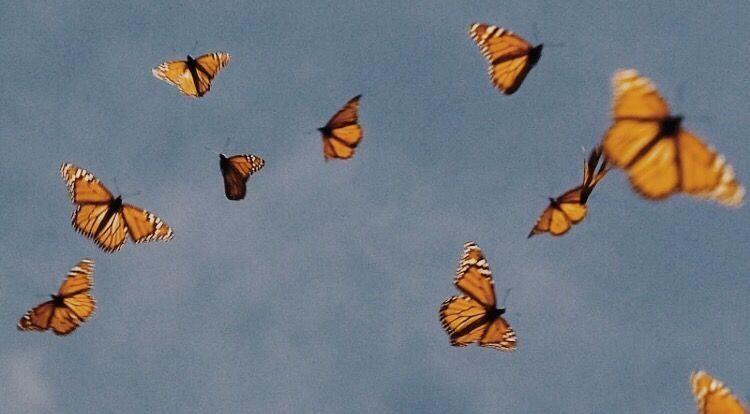Epingle Sur Butterfly Aesthetic
