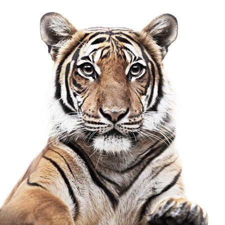 Animal Portraits Pet Portraits Photography Pet Portraits Animals Beautiful