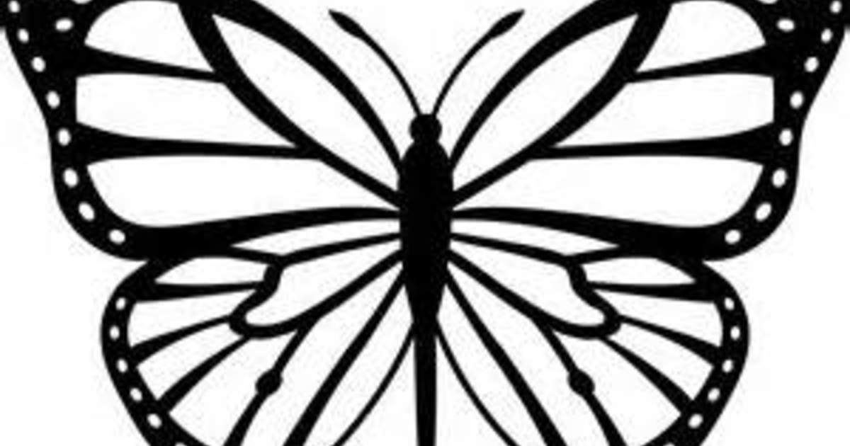 Butterfly Drawing Clipart Butterfly Drawing Butterfly Drawing Images