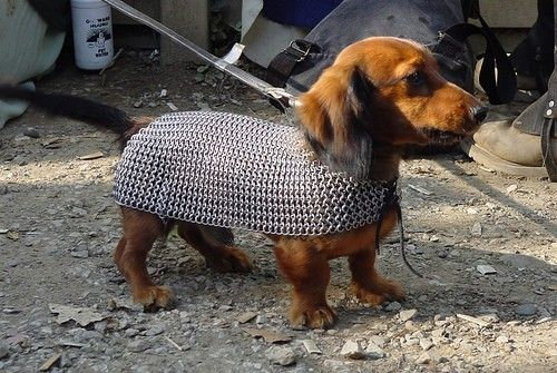 Dachshund in chainmail molly_newman