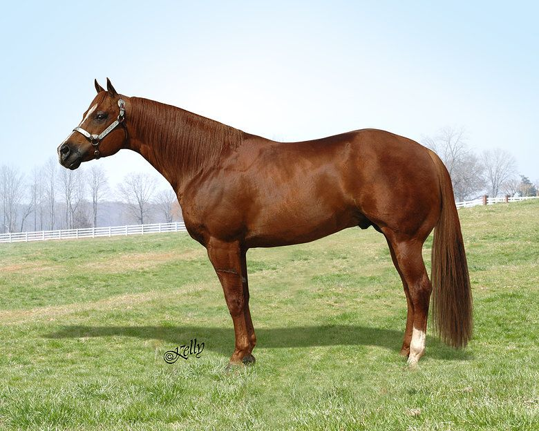 Chestnut/sorrel quarter horse stallion - Dont Skip Zip