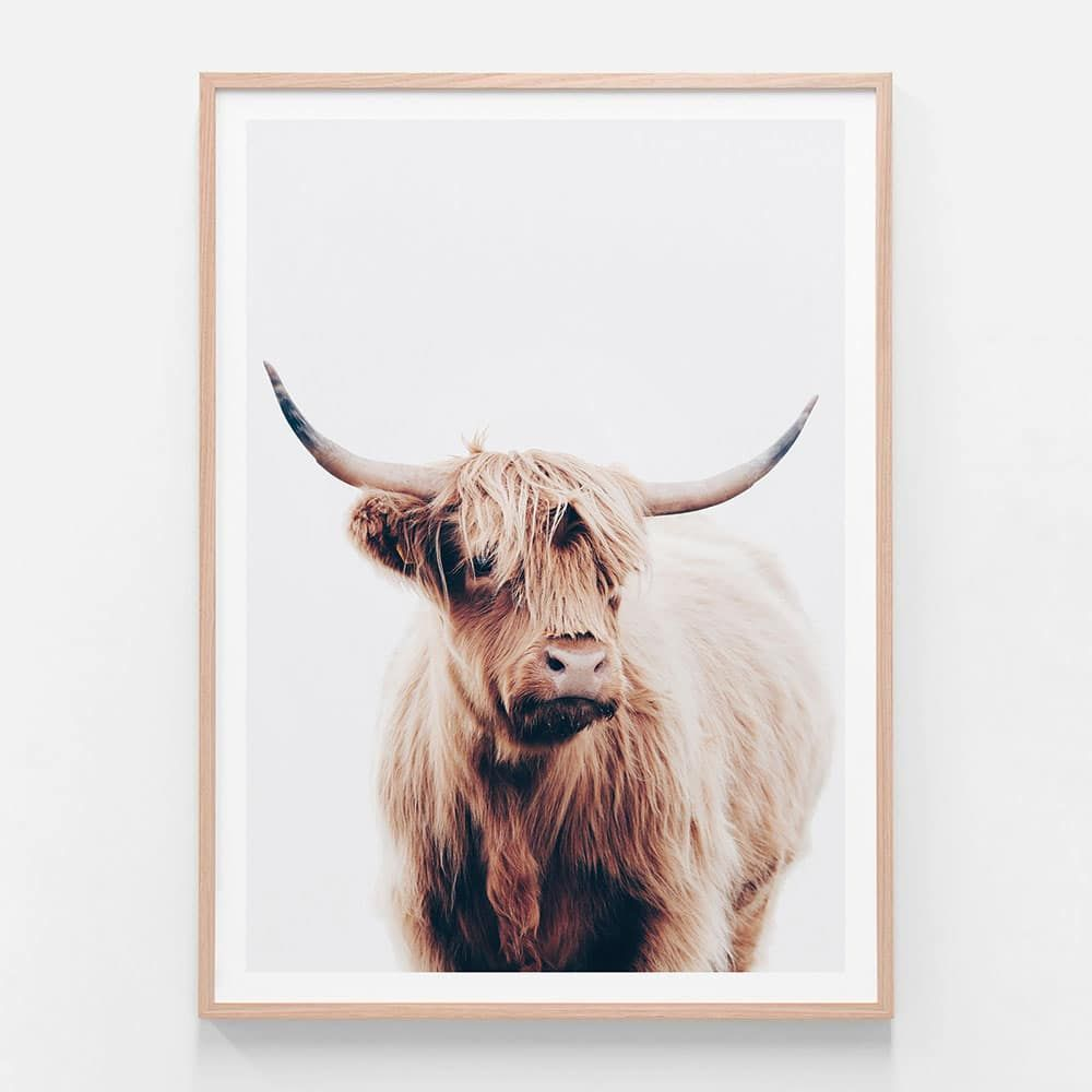 Angus Highland Cow Framed Print Or Canvas Wall Art 41 Orchard In 2020 Highland Cow Print Cow Wall Art Highland Cow Canvas