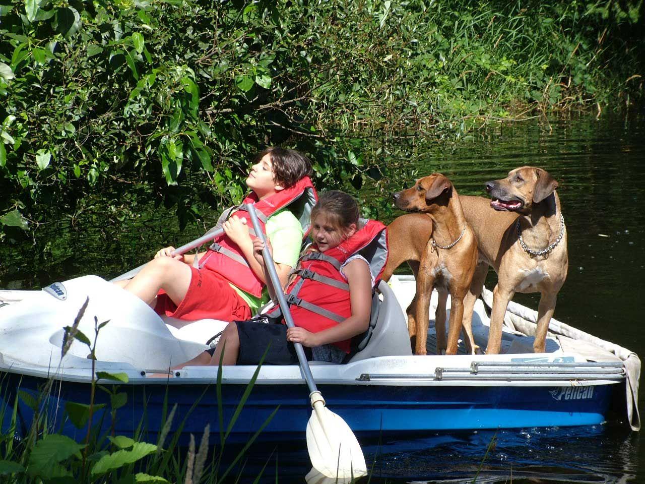 Rhodesian Ridgebacks Enjoy Paddleboat Fun In Oregon And Washington Www Apacheridgeranch Com With Images Rhodesian Ridgeback Rhodesian Ridgeback Dog The Perfect Dog