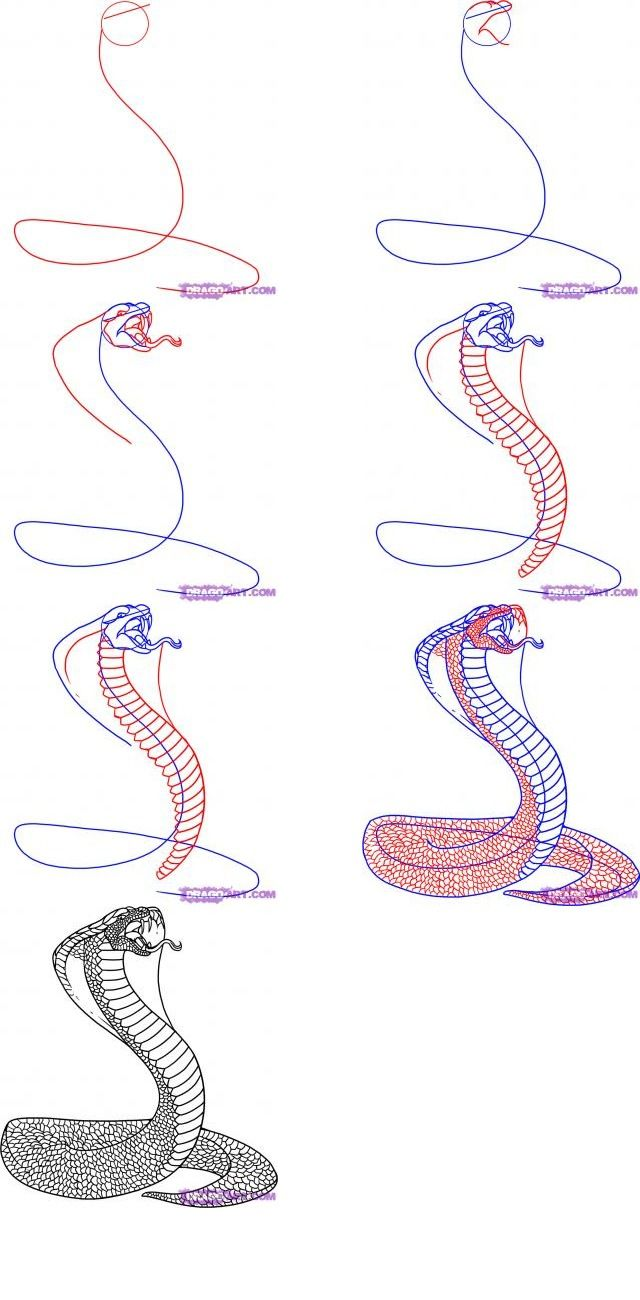 How To Draw A Snake Avec Images Dessin Serpent Dessins