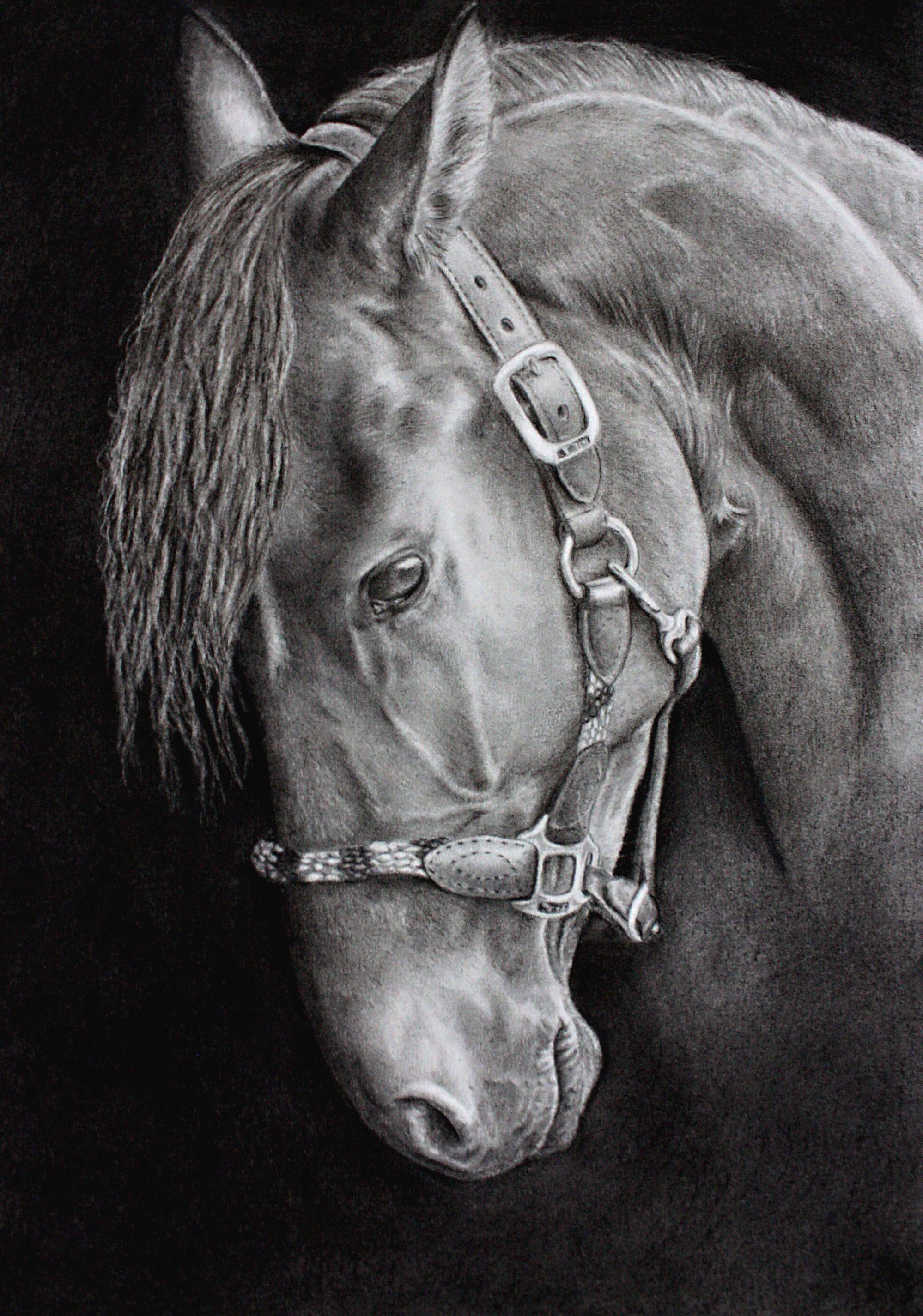 Cheval espagnol dessin fusain crayon pierre noire cheval en 2019 pinterest dessin - Cheval a imprimer noir et blanc ...