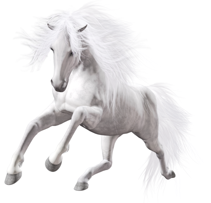Beautiful Transparent White Horse Horse Png Horse Clipart Transparent Horses Horse Art White Horse