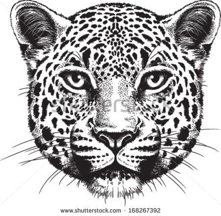 Black And White Vector Sketch Of A Leopards Face