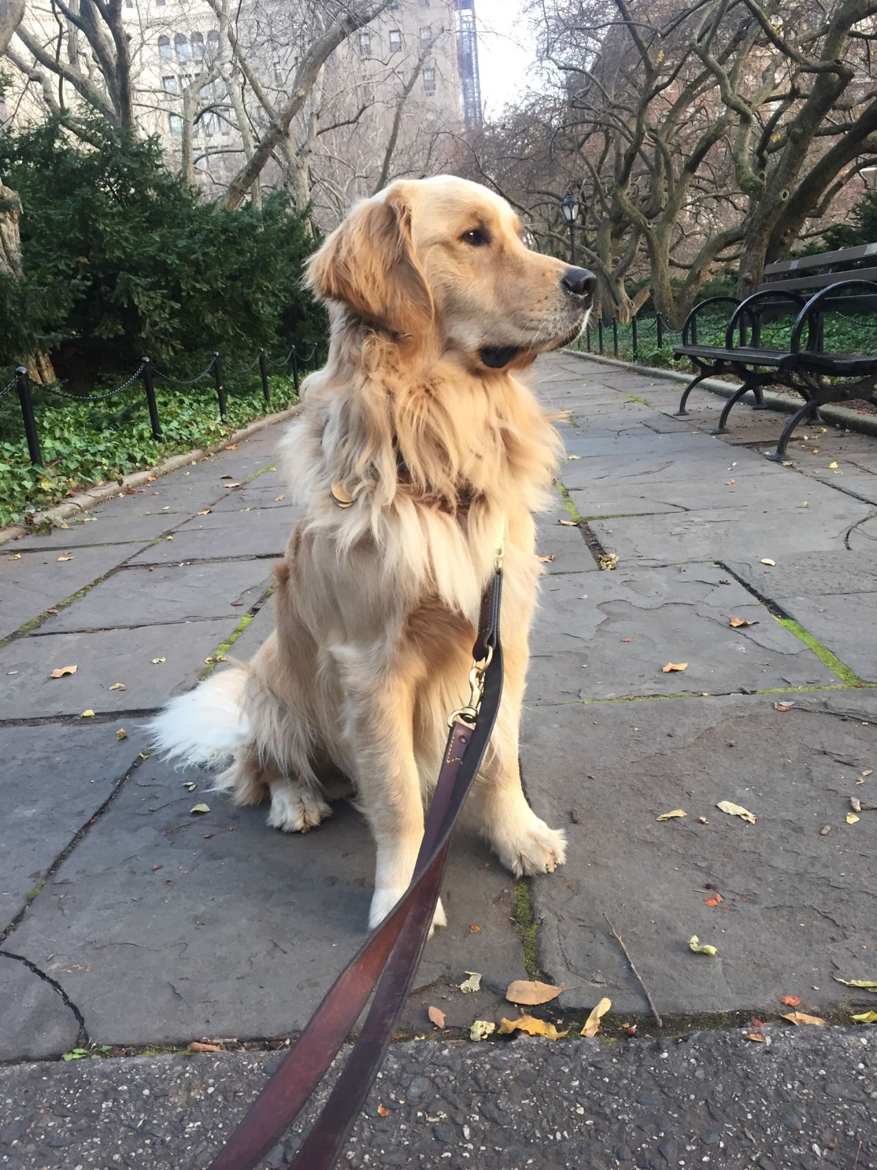 A Golden Retriever in New York — In the Conservatory