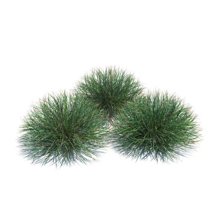 Ornamental Festuca Grass Plant By Evermotion Highly Detailed 3d