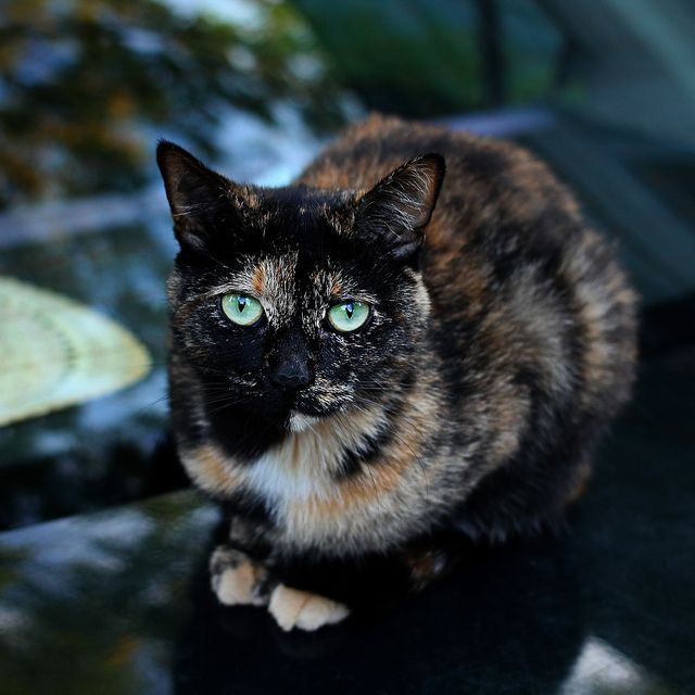 Meet Rory Our Cat Of The Week Her Striking Two Tone Face And