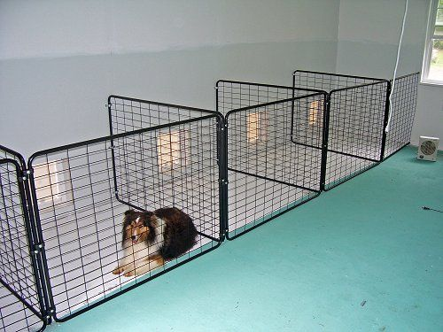 Pin By Jennifer Eubanks On Dog Kennel Ideas Pinterest Dogs Dog