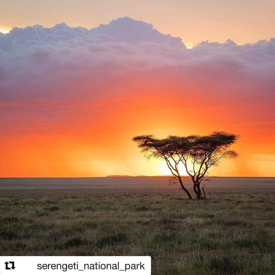 Karibu Serengeti Serengeti Sunsets Are Incredibly Hard To Beat Http Originsafaris Com Serengeti Migration Serengeti Serengeti Tanzania Africa Travel