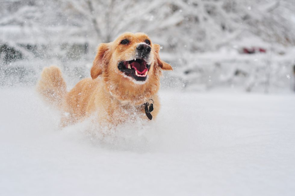 12 Simply Lovely Photos Of British Dogs Enjoying The Snow Cute