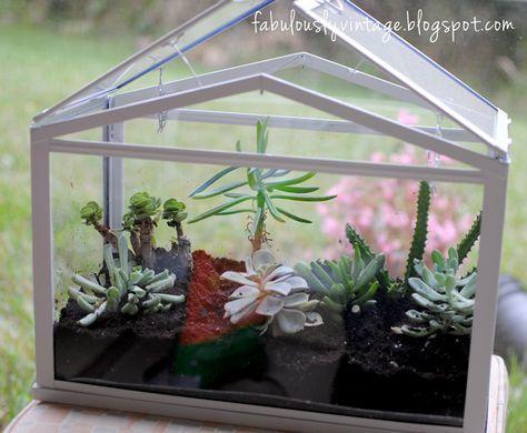 Diy Trend Kruidentuin : How to diy terrarium greenhouse air plants