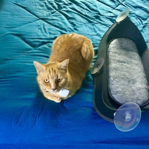 Cat Window Seat Suction Cat Bed Hamock Bed Green Cat Window Cats Cat Hammock