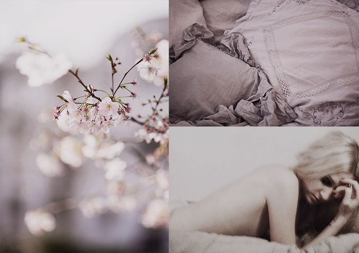 Cherry-blossom-and-French-Lavender-©-Anna--Malmberg
