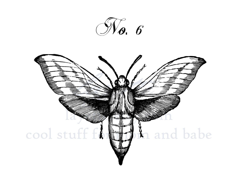 Moth drawing - photo#33